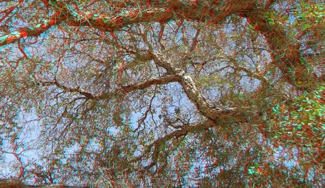 Live Oak Picnic Area 3DA 1080p DSCF3475