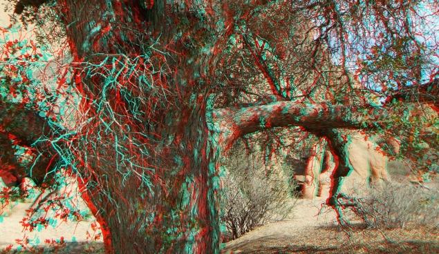 Live Oak Picnic Area 3DA 1080p DSCF3476