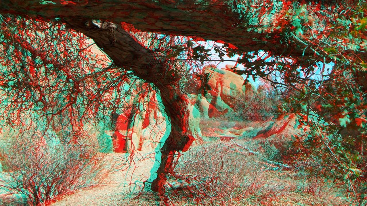 Live Oak Picnic Area 3DA 1080p DSCF3477
