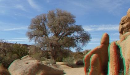 Live Oak Picnic Area 3DA 1080p DSCF3490