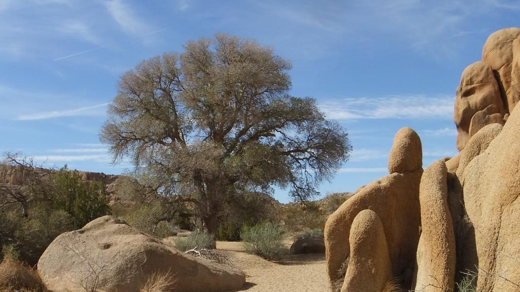 Live Oak Picnic Area Joshua Tree NP DSCF3490