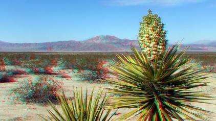 Pinto Basin 3DA 1080p DSCF3376