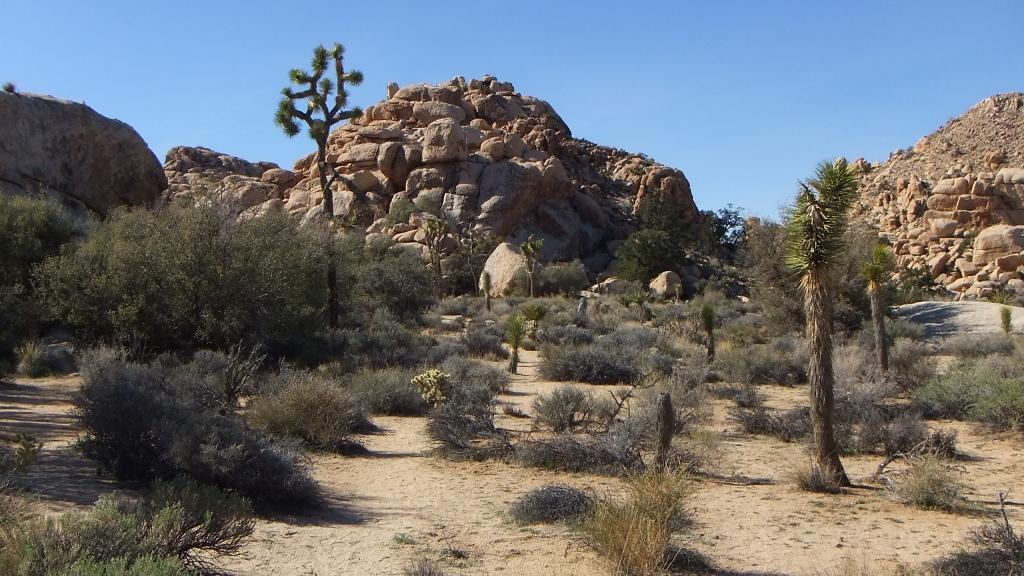 Anthrax Rock Joshua Tree DSCF1028