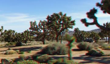 Black Rock Campground Joshua Tree NP 3DA 1080p DSCF3501