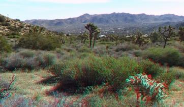 Black Rock Campground Joshua Tree NP 3DA 1080p DSCF3522
