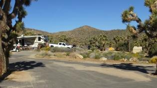 Black Rock Campground Joshua Tree NP DSCF3489