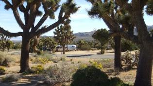 Black Rock Campground Joshua Tree NP DSCF3496