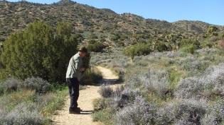 Black Rock Hi-View Trail DSCF3519