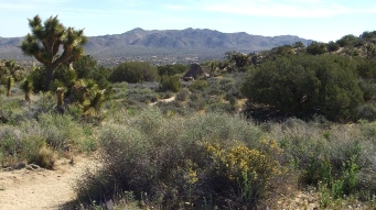 Black Rock Hi-View Trail DSCF3562