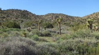 Black Rock Hi-View Trail DSCF3583