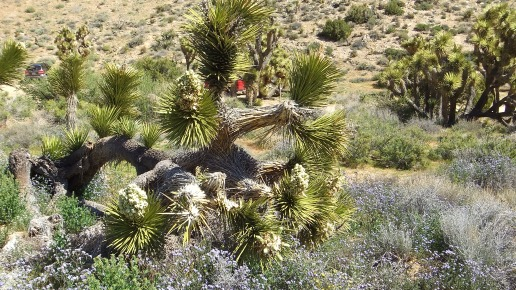 Black Rock Hi-View Trail DSCF3673