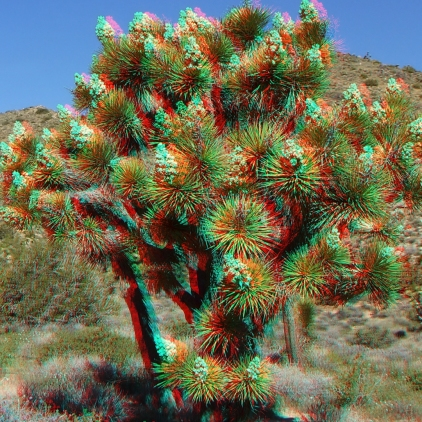 Black Rock Joshua Tree superbloom 3DA 1080p DSCF3538
