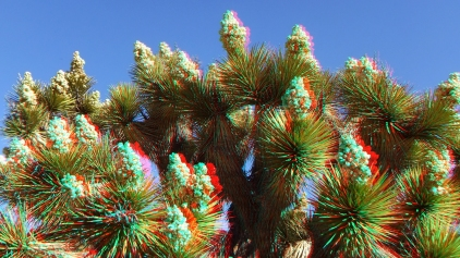 Black Rock Joshua Tree superbloom 3DA 1080p DSCF3541