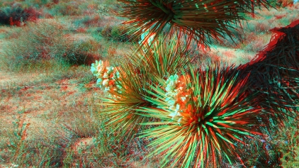 Black Rock Joshua Tree superbloom 3DA 1080p DSCF3546