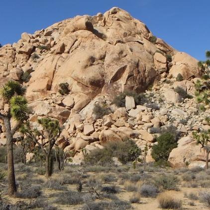 Dutzi Rock Joshua Tree NP DSCF1051