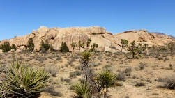 Peyote Cracks Joshua Tree NP DSCF0880 west face