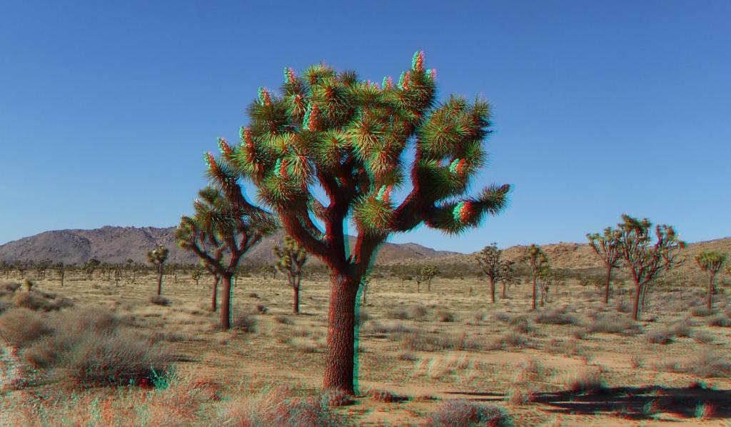 Queen Valley Superbloom 3DA 1080p DSCF3437