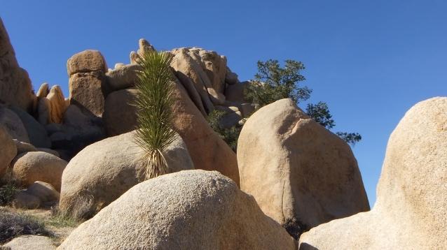 Rock Hudson Joshua Tree NP DSCF0897