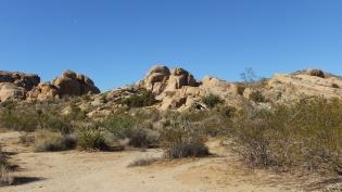 Split Rock Joshua Tree NP DSCF8563