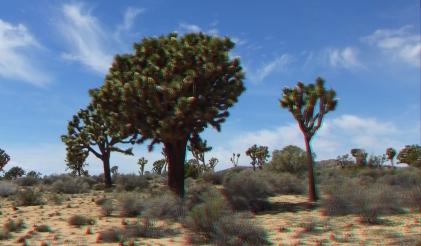 Upper Covington Flat Joshua Tree NP 3DA 1080p DSCF3701