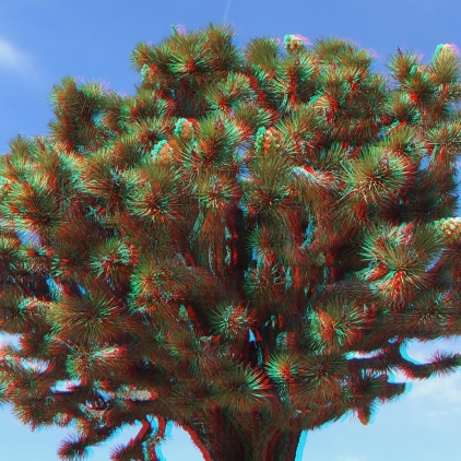 Upper Covington Flat Joshua Tree NP 3DA 1080p DSCF3704