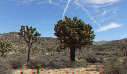 Upper Covington Flat Joshua Tree NP 3DA 1080p DSCF3713