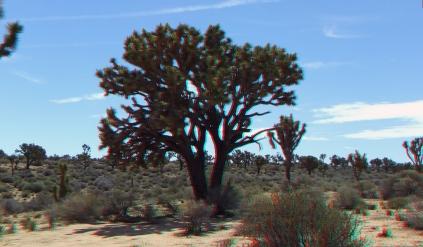 Upper Covington Flat Joshua Tree NP 3DA 1080p DSCF3719