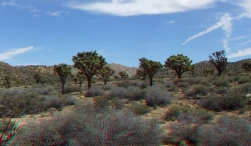 Upper Covington Flat Joshua Tree NP 3DA 1080p DSCF3735