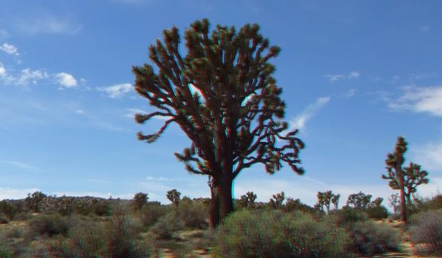 Upper Covington Flat Joshua Tree NP 3DA 1080p DSCF3737