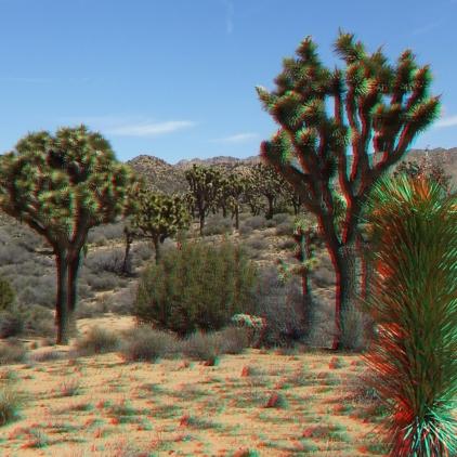 Upper Covington Flat Joshua Tree NP 3DA 1080p DSCF3755