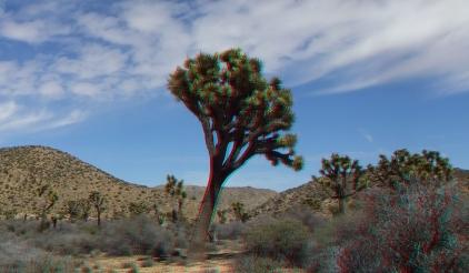 Upper Covington Flat Joshua Tree NP 3DA 1080p DSCF3759