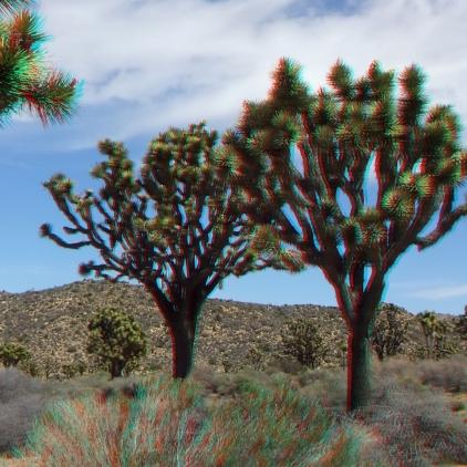 Upper Covington Flat Joshua Tree NP 3DA 1080p DSCF3764