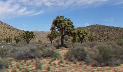 Upper Covington Flat Joshua Tree NP 3DA 1080p DSCF3768