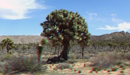 Upper Covington Flat Joshua Tree NP 3DA 1080p DSCF3773