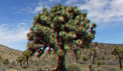 Upper Covington Flat Joshua Tree NP 3DA 1080p DSCF3781