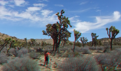 Upper Covington Flat Joshua Tree NP 3DA 1080p DSCF3800