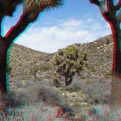 Upper Covington Flat Joshua Tree NP 3DA 1080p DSCF3808