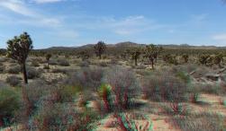Upper Covington Flat Joshua Tree NP 3DA 1080p DSCF3809