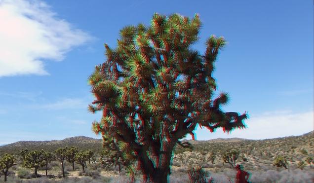 Upper Covington Flat Joshua Tree NP 3DA 1080p DSCF3817