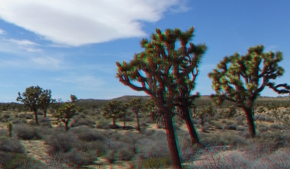 Upper Covington Flat Joshua Tree NP 3DA 1080p DSCF3818