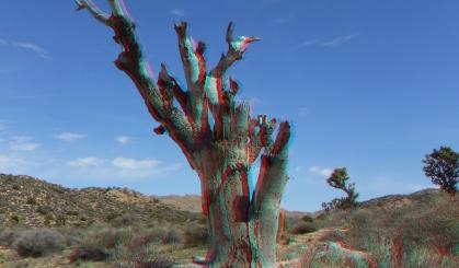 Upper Covington Flat Joshua Tree NP 3DA 1080p DSCF3850