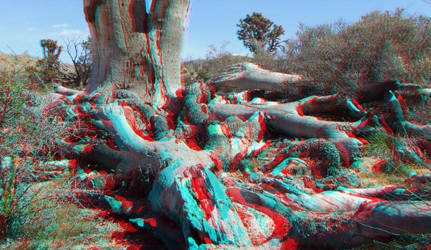 Upper Covington Flat Joshua Tree NP 3DA 1080p DSCF3851