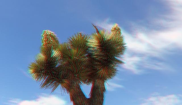Upper Covington Flat Superbloom 3DA 1080p DSCF3688
