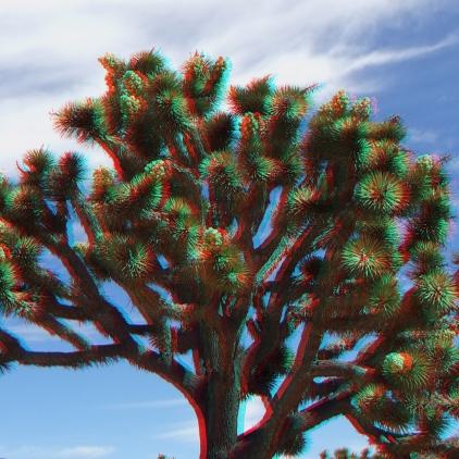 Upper Covington Flat Superbloom 3DA 1080p DSCF3710