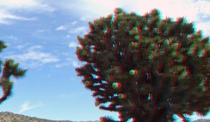 Upper Covington Flat Superbloom 3DA 1080p DSCF3715