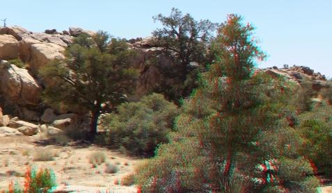 Desert Queen Mine Snake Wash 3DA 1080p DSCF4006