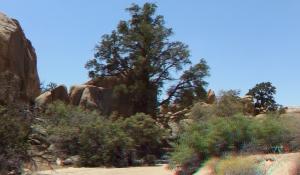 Desert Queen Mine Snake Wash 3DA 1080p DSCF4122