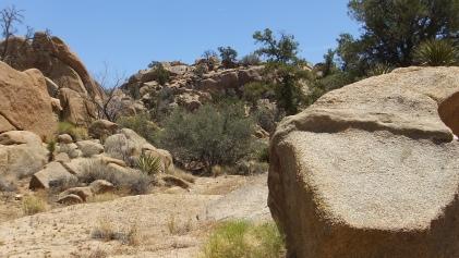 Desert Queen Mine Snake Wash DSCF4131