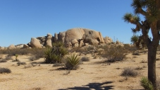 belle-campground-joshua-tree-np-dscf4611