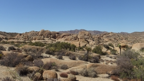 jumbo-rocks-joshua-tree-np-dscf4593